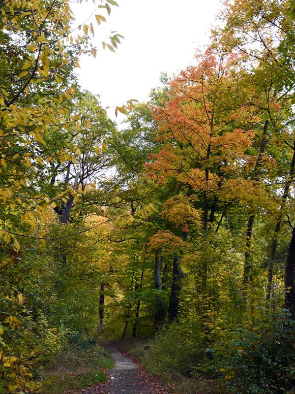 Herbslicher Wald