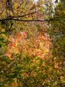 Der Wald in herbstlichen Farben