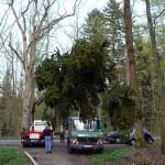 Die Maibäume werden verladen