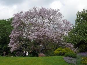 vorbei an blähenden Bäumen