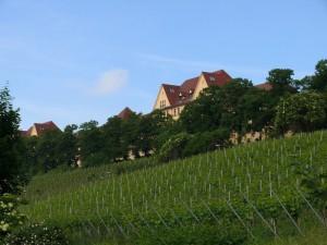 Weinberge unterhalb des Römerkastells