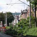 Gerodete Stelle in der Ostendstraße