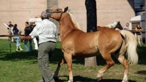 Pferdemarkt in Bietigheim-Bissingen