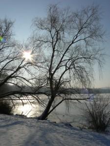Die Sonne zwischen den Bäumen
