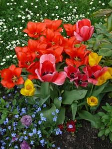 Einen schönen Blumenstrauß