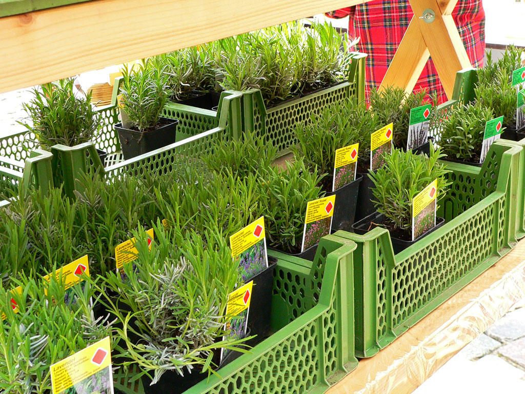 gablenberger klaus blog blog archive blumen kr uter zwerggem se pflanzenparadies auf. Black Bedroom Furniture Sets. Home Design Ideas