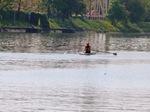 Ruderer auf dem Neckar