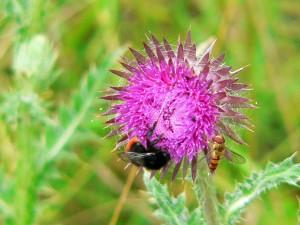 heidelandschaft, pflanzen und tiere