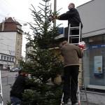 Weihnachtsbaum am Stöckach
