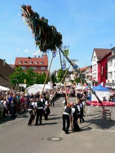 Der Maibaum in S Wangen wird aufgestellt