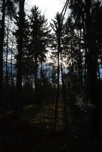 Waldspaziergang