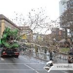 8.02.2011 Tag der Baumverpflanzung