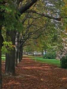 Stadtgarten2