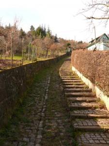 Weg-zur-Wangener-Höhe7