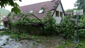 Sturmschaden-Waldheim Hedelfingen