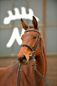 Donna-Felina-(Kraft)