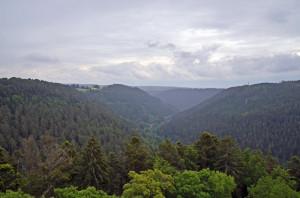 Schwarzwald1