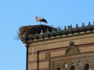 Storch-im-Nest