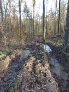 Tolle-Waldwege