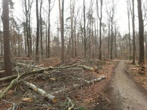 TR-Wälder-800