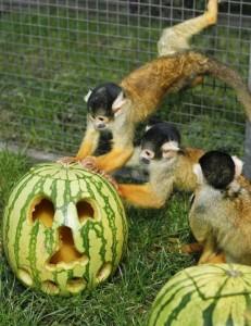 Wilhelma-Halloween_2017__1__web_01