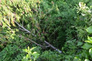 K-Bäume-Hauß2